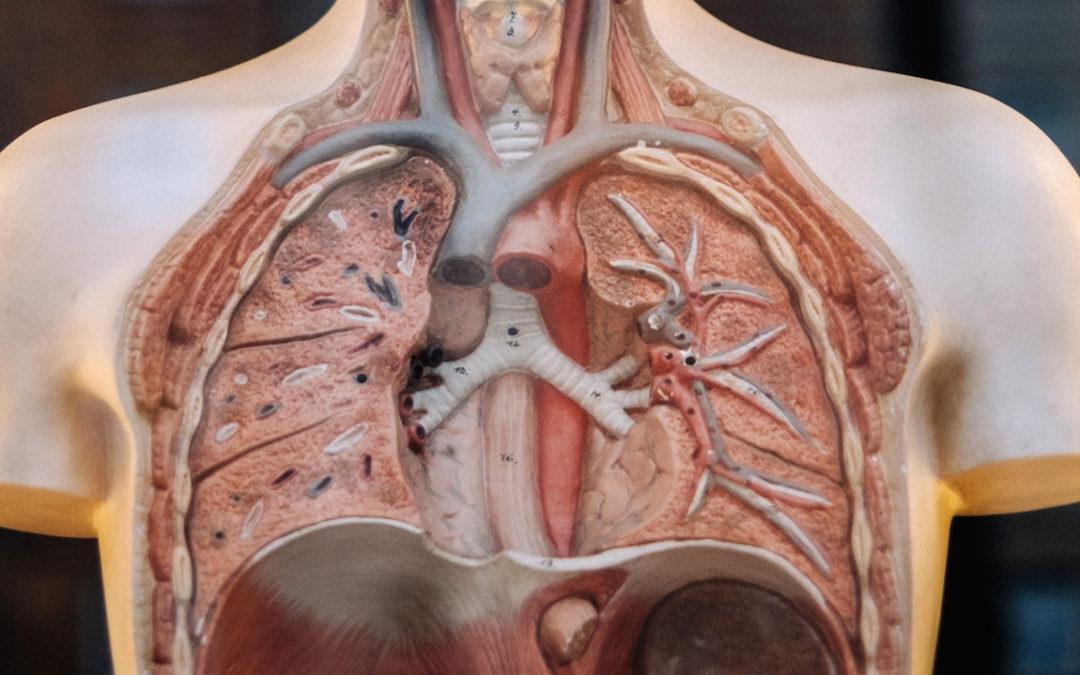 Point-of-care echografie bij patiënten met respiratoire symptomen op de SEH