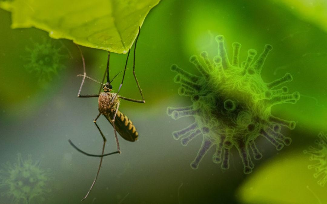 De herontdekking van chloroquine: van malaria naar corona