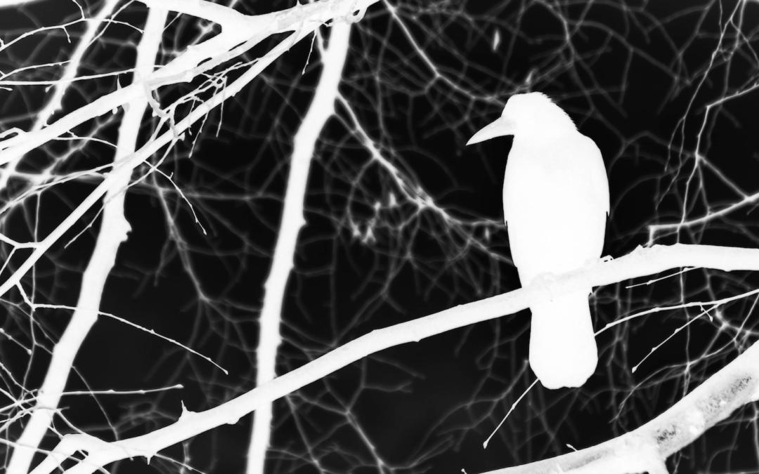 Het Leriche syndroom, een witte raaf op de SEH